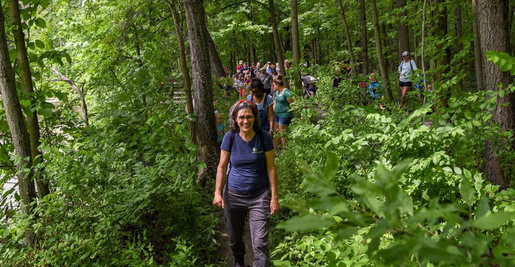 Hiking through forest preserves